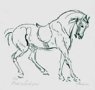 Galloping horse sketches - photo#17